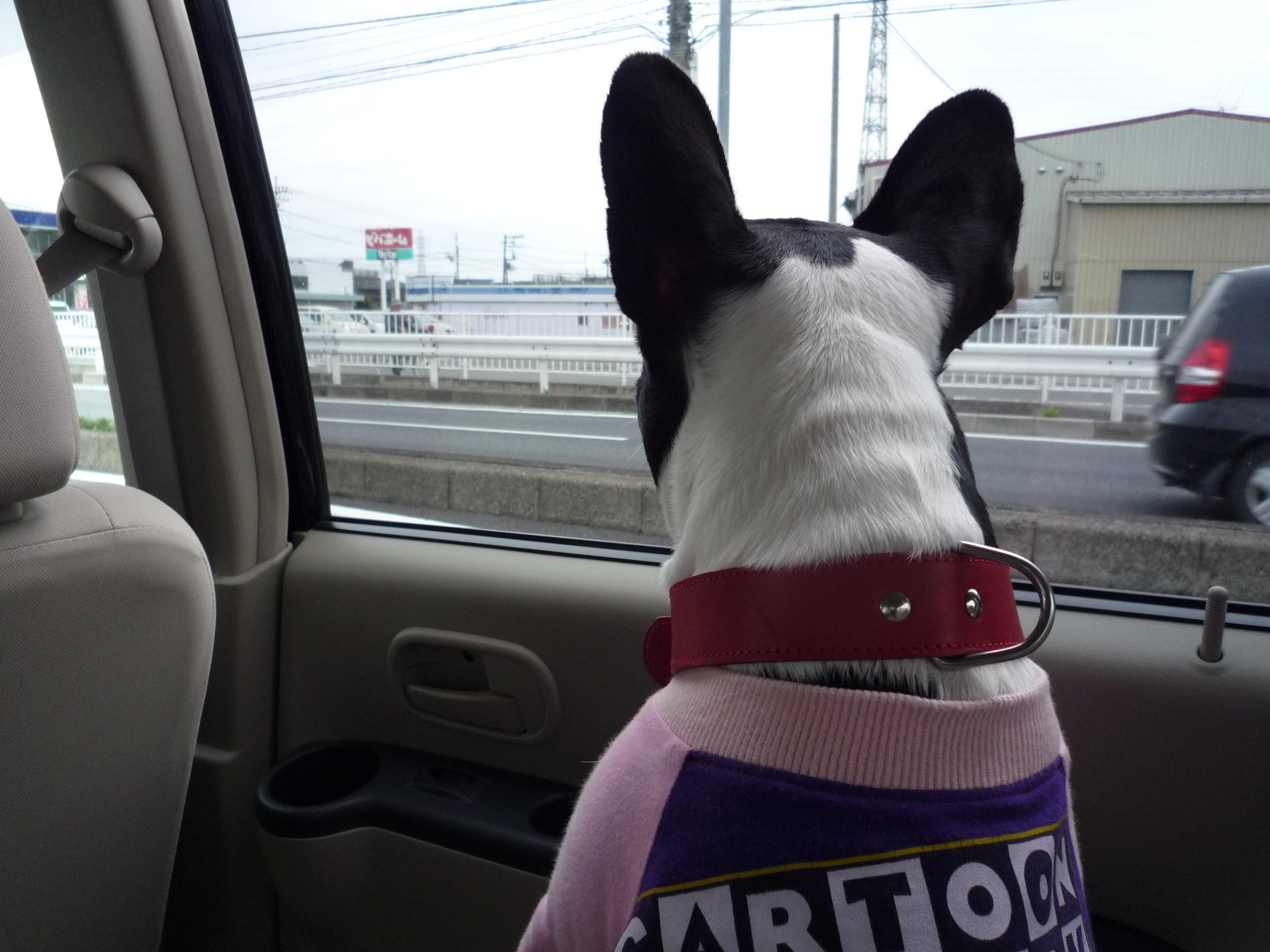 Dog_news_005_2