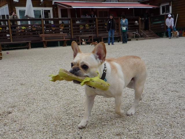 Dog_news_008