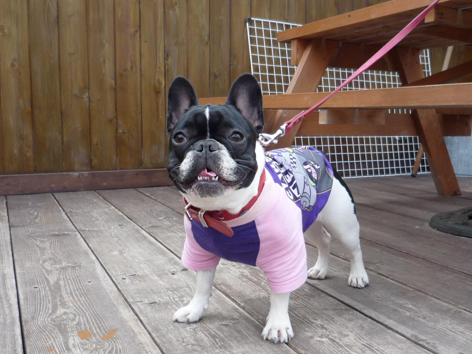 Dog_news_062