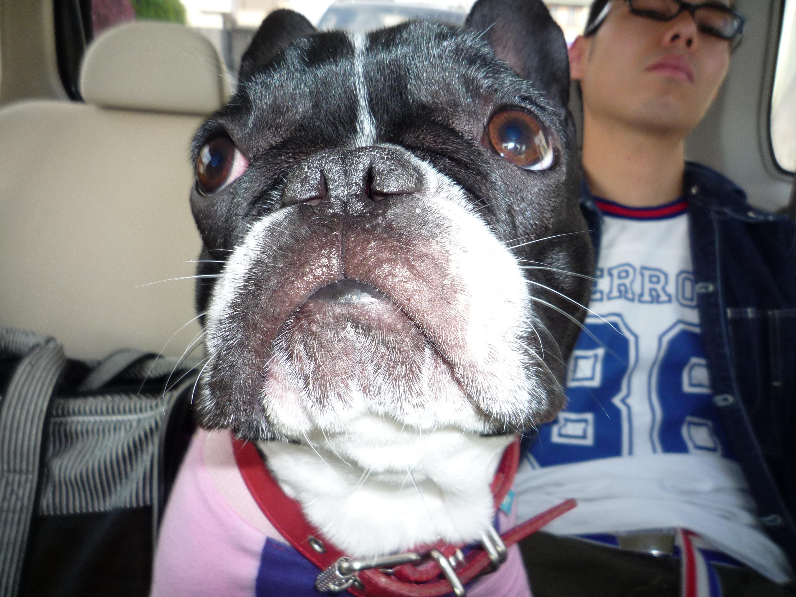 Dog_news_066