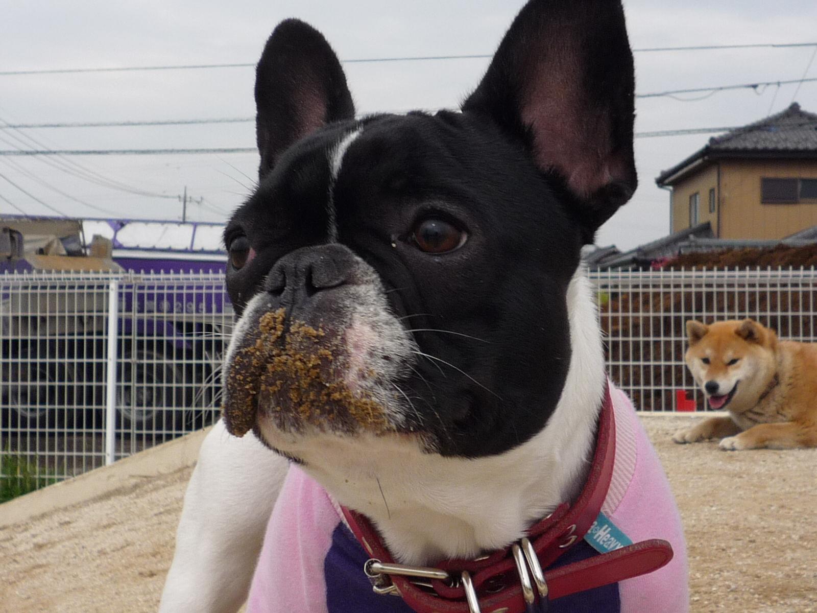 Dog_news_071